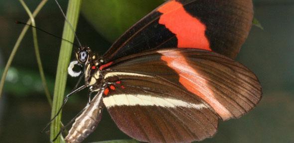 butterflyleftweb